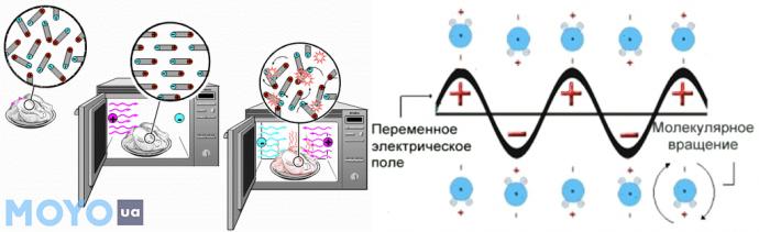 Что происходит с едой в микроволновке