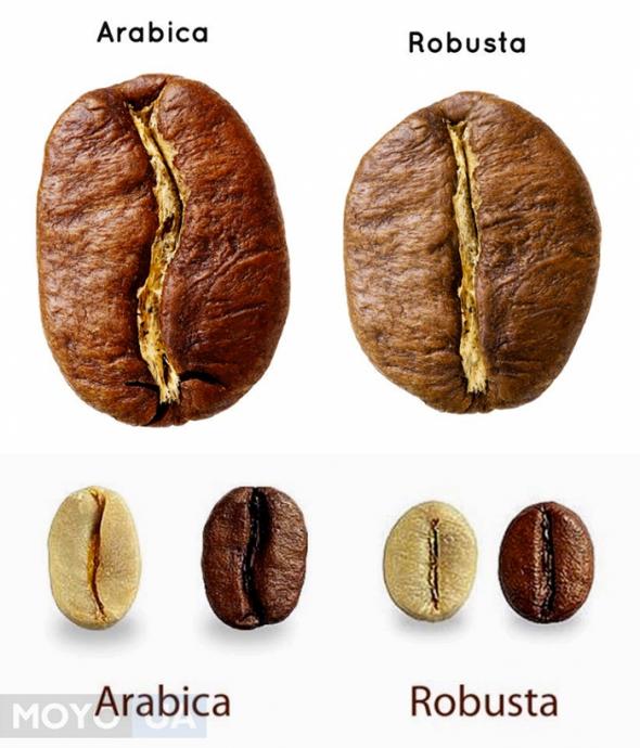 фото кофе арабика и робуста небольшое строение