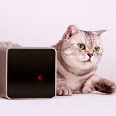Petcube Camera - гаджет для связи с домашним любимцем