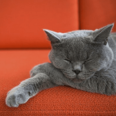 5 причин почати «очищати повітря» у себе вдома просто сьогодні