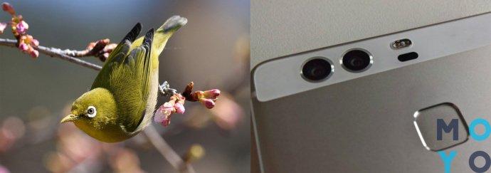 смартфоны с двумя камерами