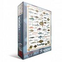 """Пазл Eurographics """"Морские рыбы"""" (6000-0313)"""