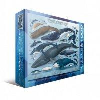 """Пазл Eurographics """"Киты и дельфины"""" (6000-0082)"""