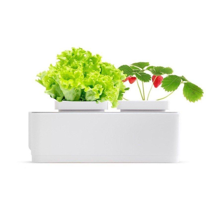 ≡ Домашний сад Magic Garden mini – купить в Киеве  32536ca85e641