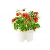 Гаджет Click&Grow Картридж томаты